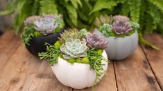 We love succulents any time of the year! In the Autumn season we think it's a great idea to tuck our favourite home grown succulent plants into a pumpkin planter (like this white ceramic one) to create a cute fall or Thanksgiving centrepiece. Succulent Planter Diy, Succulent Gardening, Planting Succulents, Planter Garden, Terrarium Diy, Container Gardening, Pumpkin Planter, Diy Pumpkin, Fall Planters