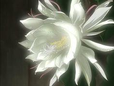Chasing Flowers - Wolf's Rain and Romanticism - Anime News Network Lunar Flowers, Rain Tattoo, Manga, Mononoke, Anime News Network, No Rain No Flowers, Anime Nerd, Anime Wolf, Stuff And Thangs