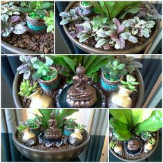 Linha Lounge Asplenium Buda Succulents, Lounge, Plants, Gifts, Celtic, Airport Lounge, Drawing Rooms, Lounge Music, Flora