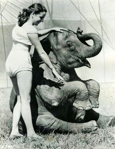 Circus | Carnival | Masquerade | Cabaret Photography at: http://www.pinterest.com/oddsouldesigns/the-secret-circus/ #showgirl #elephant