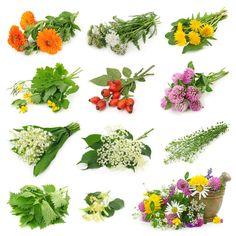 Art Print - Collection Of Fresh Medicinal Herb Herbs Image, Free Art Prints, Wild Edibles, White Background Photo, Medicinal Plants, Alternative Medicine, Herbal Medicine, Fresh Herbs, Just In Case