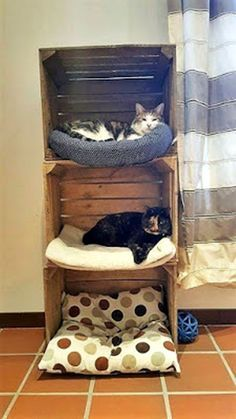 A playful and funky design of wooden pallet pet house is in this . - bed ideas - A playful and funky design of wooden pallet pet house is in this A playful and funky - Wood Pallet Recycling, Diy Cat Tree, Cat Trees, Cat Shelves, Cat Room, Cat Condo, Funky Design, Pet Furniture, Furniture Ideas