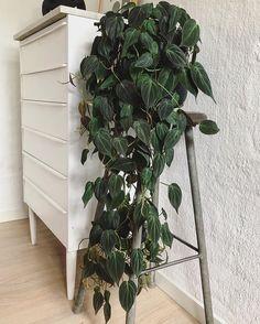 Webshop for House Plants - Online Houseplants ✔