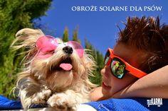 Obroże solarne dla psów
