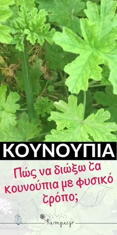 Garden Pests, Cleaning Hacks, Diy And Crafts, Clever, Survival, Herbs, Health, Plants, Aloe