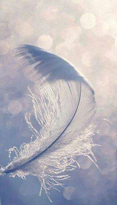 The feather flew, not because of anything in itself but because the air bore it along. Thus am I, a feather on the breath of God. ~Hildegard of Bingen Wallpaper Telephone, Angels Among Us, All Nature, Nature Images, White Feathers, Blue Feather, White Feather Meaning, Feather Texture, Feather Touch