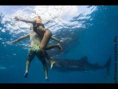 Морские  монстры-нападение акул