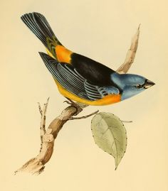 ARTEFACTS - antique images: Antique Bird Print - for personal use only!