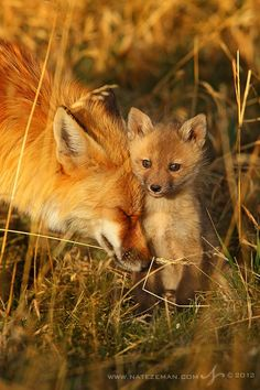 `Mama fox and her kit.