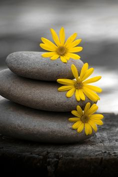 The yellow daisies are the focal point due to their bright contrast.