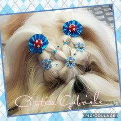 Hairstyle Dog - Model Shihtzu Kenzo