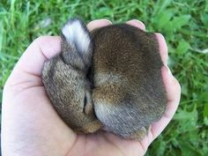baby koala<----- I don't know who wrote this but this animal is a bunny, not a koala. Cute Baby Bunnies, Funny Bunnies, Cute Babies, Tiny Bunny, Animals And Pets, Baby Animals, Funny Animals, Animals Photos, Super Cute Animals