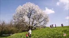 Ogni anno nei giorni della fioritura diventa meta di un vero e proprio pellegrinaggio di decine e decine di amanti della natura e appassionati di...