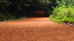 Behçeköy Belgrad Ormanı, Belgrad Ormanı Yürüyüş Parkuru, Belgrad Ormanı Mesire Alanı