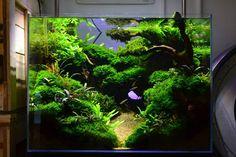 Favourites: display tank at Exotic Aquatic Amazing scenery. So much depth. So green! Close to perfection, right? Visit this cool shop if you are close to Melbourne, Australia More great aquascapes @ http://simonsaquascapeblog.tumblr.com