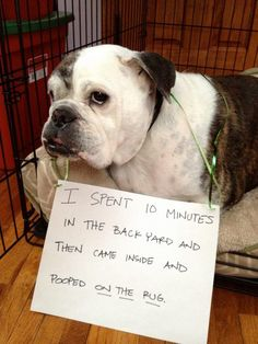 Hall of Shame   BaggyBulldogs - unfortunately my bulldog does this too :(