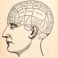 brain_custom-216c7c62e356f71a24d1a33f38a9b0cd77f46905-s6-c30.jpg (948×951)