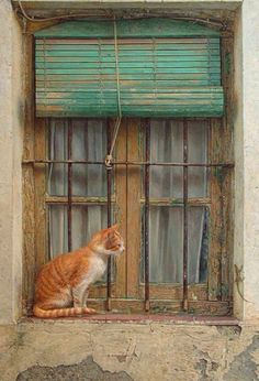 The cat's cute and I love the window