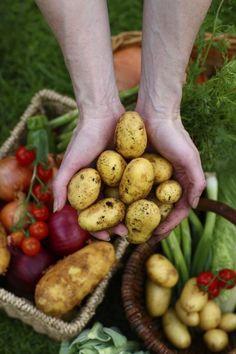 Shelf Life of Vegetables