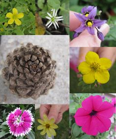 Brimful Curiosities: Fibonacci Nature for Kids - Science Sunday