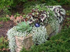 Hypertufa has an ancient, hand-hewn quality; a perfect home for plants that you might find nestled into crevices in a rock garden, such as alpines, succulents, mosses and even tiny evergreens. Here's how you can make your own. http://www.gardeners.com/Hypertufa/7925,default,pg.html#?utm_source=pinterest.com_medium=referral_term=learn_content=pin_campaign=hypertufa-how