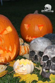 skull replica for sale #skull #skullreplica #bone #skeleton #calavera #tattoo #inked #skullart #photography #instaskulls #metal #grave #shot #shotglasses #scarynotscary #beautiful #life #death #kutnahora #czechrepublic #czechquality #kostnice #oldage #nothingisforever #mementomori Skull Decor, Skull Art, Calavera Tattoo, Halloween Skull, Skull And Bones, Shot Glasses, Memento Mori, Beautiful Life, Skeleton