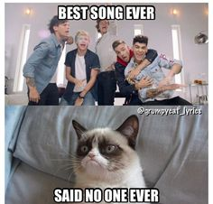 Grumpy Cat sings Best Song Ever by One Direction More