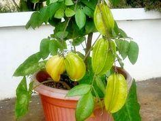 Tips menata halaman rumah dengan tanaman bunga dan tanaman buah ...