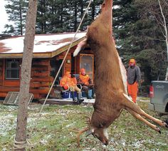 You shot a deer. Here's how long you need to wait for the tenderest meat
