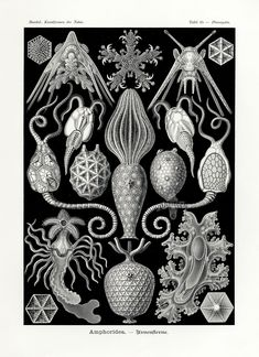 haeckel - Google Search