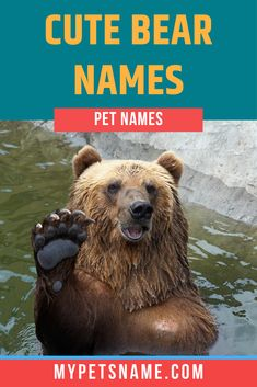 It is not just teddies that are adorable either, loads of real-life bears are incredibly cute too, such as beautiful Koalas, with their adorable ears and Polars, with their soft white fur and tiny, black eyes. Find cute bear names in this list that are as cute as your pet,  #bearnames #cutebearnames #namesforbears Cute Pet Names, Cute Bears, White Fur, Brown Bear, Your Pet, Real Life, Eyes, Funny, Koalas