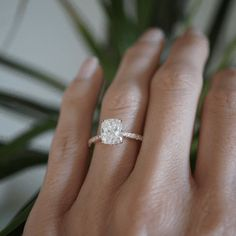 Radiant Engagement Rings, Engagement Rings Cushion, Dream Engagement Rings, Engagement Ring Cuts, Engagement Jewellery, Oval Solitaire Engagement Ring, Most Beautiful Engagement Rings, Oval Halo Engagement Ring, Rectangle Engagement Rings
