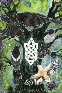 The Corvids are a large family composed of the familiar crows and jays, plus close relatives like magpies, treepies, nutcrackers and choughs.