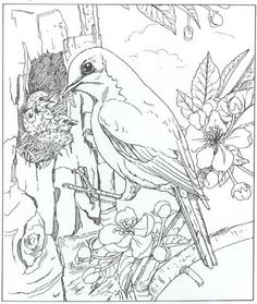 coloring page Nature around the house - Nature around the house