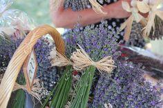 TIHANYI LEVENDULA FESZTIVÁL Colours, Purple, Plants, Plant, Viola, Planets