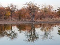 "12 Likes, 2 Comments - Riebelton Safaris (@riebelton_safaris) on Instagram: ""Reflections..."""