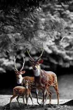Beautiful Photos of Animal Kingdom Deer Family in the forest!Deer Family in the forest! Nature Animals, Animals And Pets, Baby Animals, Cute Animals, Wild Animals, Animal Babies, Nature Nature, Funny Animals, Beautiful Creatures