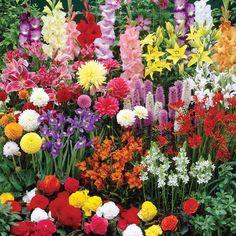 Summer Bulbs Collection - Other Flower Bulbs - Van Meuwen http://rzv84.blogspot.com/2013/06/the-bulbs-of-summer.html