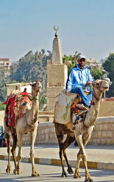 Camel Man - - - - - Camels are still a huge part of Cairo as this man in blue rides along and leads another.   #travel #Egypt