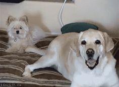 """7 mascotas con mejores propósitos de año nuevo que tú - 1. """"Bajaré de peso … antes que tú"""" 3. """"Pondré fin a esa incómoda relación"""" 4. """"Romperé el récord de la mayor cantidad de siestas… del mundo"""" 5. """"Voy a comer más sano … tu comida"""" 6. """"Pasaré más tiempo con los amigo... #animales, #Entretenimiento=Relajateydisfruta..., #vive=Personas,animales,lavidaytodossussecuaces. http"""