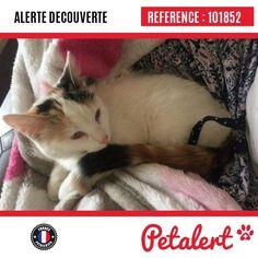 15.09.2016 / Chat / Corbeil-Essonnes / Essonne / France