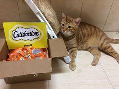 Nesta campanha Catisfactions, os gatos vão ser os protagonistas saudáveis e poderão provar algo muito nutritivo, crocante e cremoso.