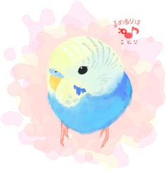 Budgerigar. ほんわか風味~なセキセイインコ。 FACEBOOK PAGE https://www.facebook.com/mamelurihakotori Thank you for seeing. Like us on Facebook now!