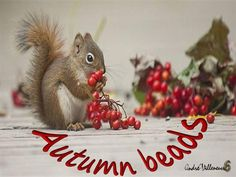 """""""On the motionless branches of some trees, autumn berries hung like clusters of coral beads, as in those fabled orchards where the fruits were jewels . . ."""" Charles Dickens Cute Birds, Chipmunks, Otters, Cool Photos, Berries, Royalty Free Stock Photos, Pets, Nature, Squirrels"""