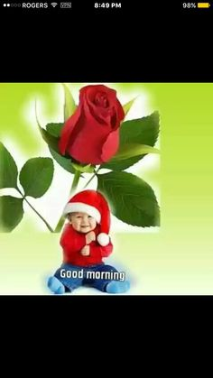 Gd Morning, Good Morning Everyone, Good Morning Images, Morning Greetings Quotes, Morning Quotes, Good Morning Christmas, Pretty Flowers, Prettiest Flowers, Good Day