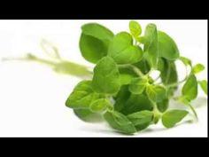 Cura la diabetes y sobrepeso con estos remedios naturales | iVidaSaludable