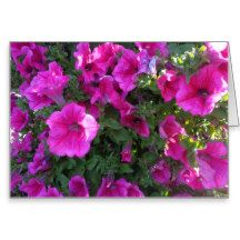 Nature, Flora, Pink Flower Greeting Card