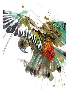 Official Rachel Walker Page. New Zealand watercolour, spray paint, pen and ink artist creating splashy celebrations of native and rare animals. Watercolor And Ink, Watercolor Paintings, Watercolours, Watercolor Tattoo, Rachel Walker, Street Art, Nz Art, Bird Artwork, Bird Drawings