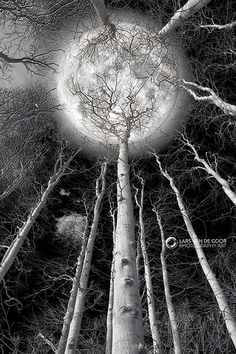 Holding the Moon by larsvandegoor.com, via Flickr