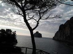 Il pino e Pan di Zucchero,Sardegna